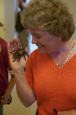 Tarantula being held by a visitor.